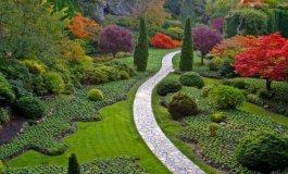 حديقة.jpg