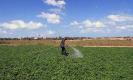 المزارعين بغزة.jpg